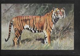 AK 0373  Tiger - Künstlerkarte Um 1910-20 - Tiger