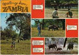 Zambia - Elephants/les éléphants/Elefanten - Sambia