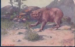 POSTAL GRIZZLY BEAR - ILUSTRADOR JOHN INNES - TROILENE - OSO PARDO - Osos