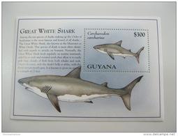 Guyana-Fish-Marine Life - Peces