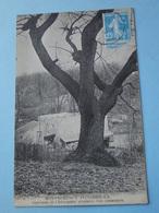 MONTMORENCY  (Val D'Oise) -- Lot 2 Cpa Différentes - Châtaignier Plusieurs Fois Centenaire & La Châtaigneraie - Montmorency