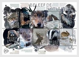 Netherlands 2019 MS MNH Experience Nature  Mammals Wild Cat Geoffroy's Bat Wolf Grey Seal Stoat Polecat Otter Fox Rabbit - Fledermäuse