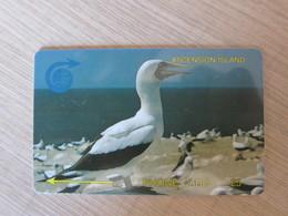 GPT Phonecard, 4CASA Sea Birds, Mint - Ascension