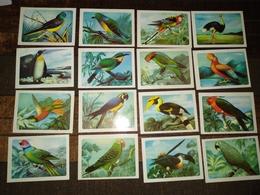 """16 Portuguese Pocket Calendar, Calendário Português """"Animals, Aves, Birds"""" Advertising - Kleinformat : 1981-90"""