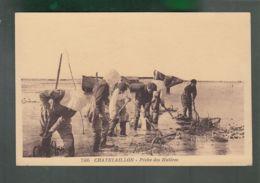 CP - 17 - Chatelaillon  -  Pêche Aux Huîtres - Châtelaillon-Plage