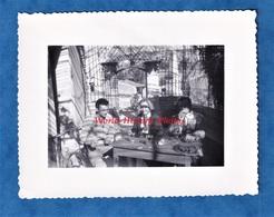 Photo Ancienne Snapshot - LIOUX ( Vaucluse ) - Homme & Femme En Terrasse D'un Ptit Café - 1955 - Verre Vin - Joucas Murs - Places