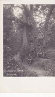 ( 55 ) - Argonnen Argonnes Abgeschossener Baum  Carte Photo Allemande 1° Guerre - Francia