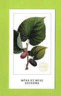 Cartes Parfumées Carte MUR Et MUSC EXTRÊME   De L'ARTISAN PARFUMEUR   Recto Verso - Cartes Parfumées