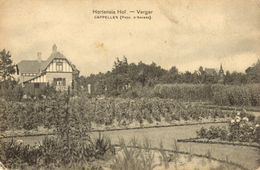Hoogboom - Hortensiahof Verger - H001b - Kapellen