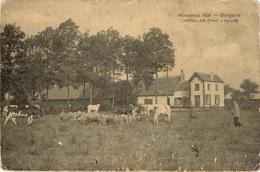 Hoogboom - Hortensia Hof Bergerie - K001ekl - 1911 - Kapellen
