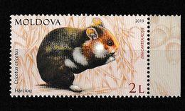 Moldavie; Moldova. Grand Hamster  ** - Rongeurs