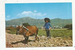Cp, CHINE ,HONG KONG , Agriculture , Traditional Farming In The Orient ,  Vierge - China (Hongkong)