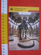 E.02 FOSSILI POST CARD GERMANY - FOSSIL DES JAHRES 2013 - GAMPHOTHERIUM MUNCHEN  MONACO PALEONTOLOGY - Musei
