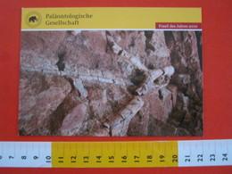 E.02 FOSSILI POST CARD GERMANY - FOSSIL DES JAHRES 2010 - ARTHROPITYS SACHSEN CHEMNITZ PALAONTOLOGISCHE PALEO - Musei