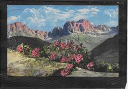 AK 0374  Alpenflora ( Steinrösel ) - Verlag Stempfle Um 1910-20 - Blumen