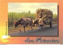 DOM-TOM-ILE DE LA REUNION CHARRETTE BÅ'UF-N°C-3557-C/0027 - La Réunion