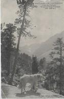 65,  Hautes Pyrénées , CAUTERETS, Chiens Des Pyrénées - Gorges Du Pont D'Espagne, Scan Recto Verso - Cauterets