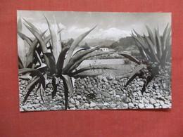 RPPC  Cactus  Mexico  Ref 3747 - Cactusses