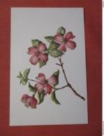 Flowering Dogwood       Ref 3748 - Flowers