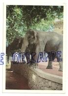 Zoo Anvers Antwerpen. Eléphants Des Indes.  Foto Six. 1967 - Éléphants