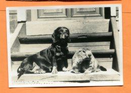 LAC184, Teckel, Marmotte, Basset, Marmots, GF, Circulée 1964 - Cani