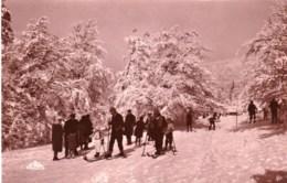 88 - Vosges - La Schlucht - La Piste Des Skieurs ( Carte Glacée ) - France