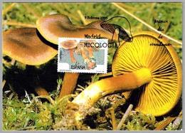 Seta DERMOCYBE CINNAMOMEA - Mushroom. Madrid 1995 - Hongos