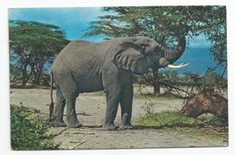 Africa Wild Life 1965 - Elephant. - Elephants
