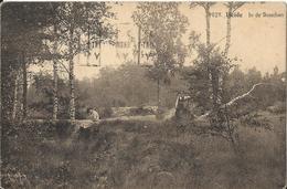 Heide - Kalmthout - In De Bosschen 1925 (Hoelen ? Nr 9029) - Kalmthout