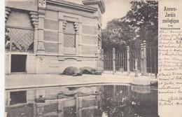 ANTWERPEN / DIERENTUIN / ZOO  HIPPOPOTAMES 1902 - Antwerpen