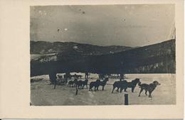 Attelages De Chiens , Service De Ravitaillement Ou Transport Des Blessés, 1917 - Carte Photo - WW1 - Guerre 1914-18