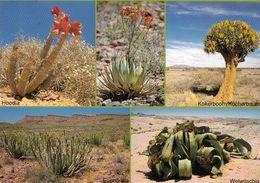 1 AK Namibia * Blühende Pflanzen In Der Halbwüste Und Der Namib Wüste * - Namibië