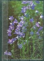 FLEURS - Jolie Fleur Bleue - Flowers