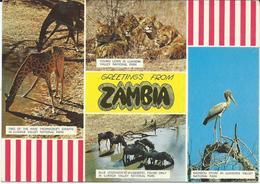Zambia Via Yugoslavia - Motive Animals - Zambia