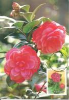 Carte Maximum - Taiwan - Formose - Flowers - Fleurs - Camellia Japonica - 1945-... Repubblica Di Cina