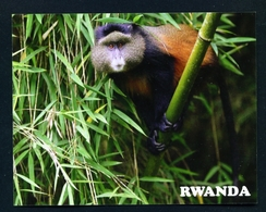 RWANDA - Golden Monkey In Nyungwe National Park Used Postcard As Scans - Rwanda