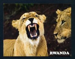 RWANDA - Lions In Akagera National Park Used Postcard As Scans - Rwanda