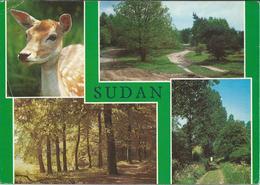 Sudan Postcard - Sudan