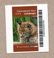 Privatpost -  Biberpost  - Jungtier Luchs (Lynx Lynx) - Felinos