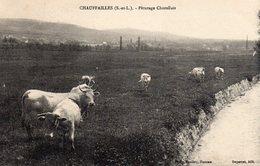 71 Chauffailles, Paturage Charollais - Francia