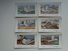 Beau Lot De 10 Cartes Postales Oiseaux  Oiseau  Illustrateur H.Dupond     Mooi Lot Van 10 Postkaarten Van Vogels  Vogel - Postkaarten