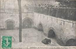 75 INONDATIONS DE PARIS JANVIER 1910 AU JARDIN DES PLANTES BAIN FORCE - Alluvioni Del 1910
