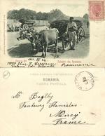 Romania, Salutări Din Romănia, Care Cu Boi, Ox Cart (1901) Greetings Postcard - Roemenië