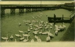 UK - WEYMOUTH - THE SWANS - EDIT F.G.O. STUART - MAILED TO ITALY - 1911 (BG6371) - Weymouth