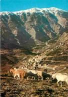 84 - Brantes - Brantes Et Le Mont Ventoux - Chèvres - Carte Neuve - Voir Scans Recto-Verso - France