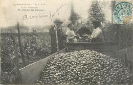 ACHAT DES POMMES Vie En Normandie  2scans - Landwirtschaftl. Anbau