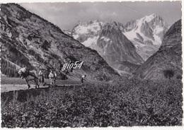 Aosta Courmayeur Monte Bianco Mestieri Semina Patate Fg - Italia