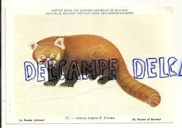 Institut Royal Des Sciences Naturelles De Belgique. Mammifères Du Monde Entier. Panda Eclatant. Panda Of Beerkat - Dieren