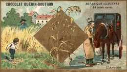 CHROMO CHOCOLAT GUERIN BOUTRON BOTANIQUE ILLUSTREE L'AVOINE - Guerin Boutron
