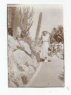 Photographie Monaco Jardins Exotiques 1932 Photo 6,x8,5 Cm Env - Lieux
